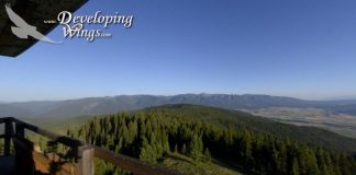 View the Jocko Valley from Pistol Creek Fire Tower